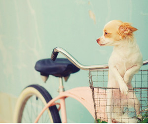 cute, dog, and bike image