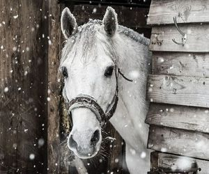 grey, horse, and snow image
