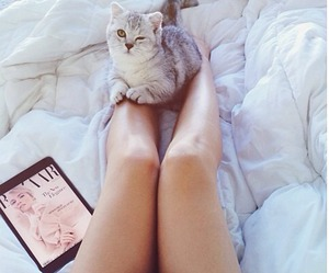 beauty, summer, and cat image