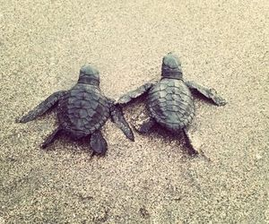 beach, turtles, and cute image