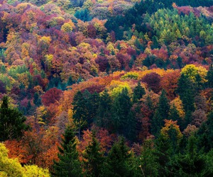 forest, landscapes, and nature image