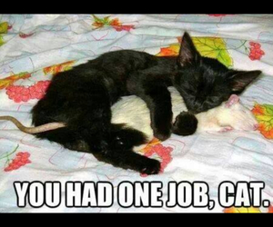 cat, lol, and cute image