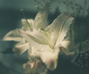 flowers, vintage, and dark vintage image