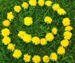 flowers, yellow, and happy image