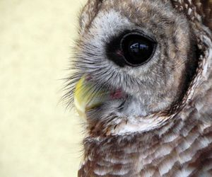 animal, cute, and owl image