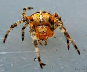 insects, macro, and spiders image