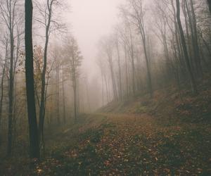 fairy, fantasy, and wonderland image
