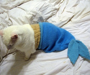 cat, cute, and mermaid image