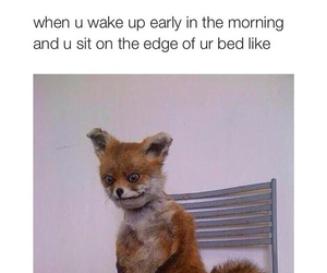 funny and fox image