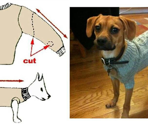 clothes, diy, and dog image