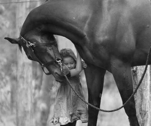 horse, animal, and black and white image