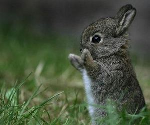 animal, animals, and bunny image