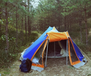 beautiful, camping, and forest image