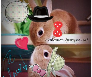 conejos, cute, and heart image