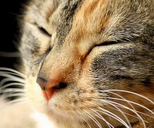 animals, cats, and close-up image
