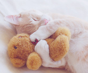 cat and cuddle image