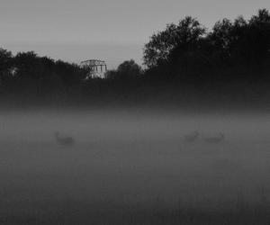 animal, dawn, and deer image