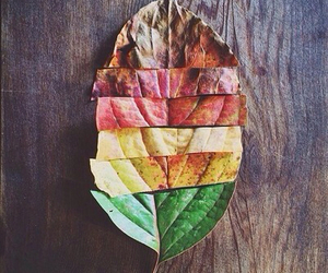 leaves, autumn, and nature image