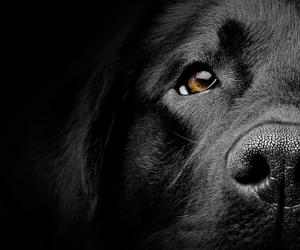 dog, black, and sweet image