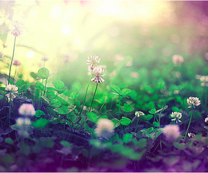 clover and flowers image