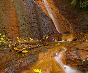 autumn, D80, and landscape image