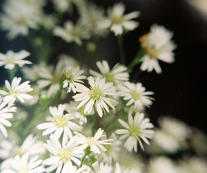 35mm, flowers, and light image