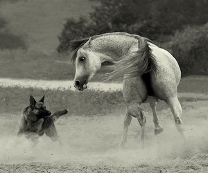 horse, dog, and horse and dog image