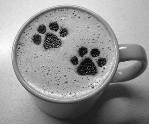 coffee, dog, and paws image