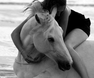 animals, horse, and love image