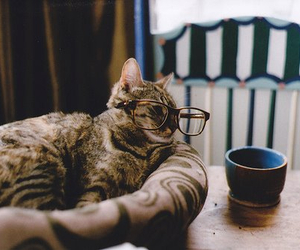 cat, glasses, and photography image