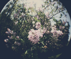 flowers, indie, and hipster image