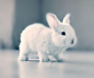 bunny, cutie, and rabbit image