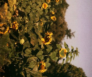 flower, pretty, and sun image