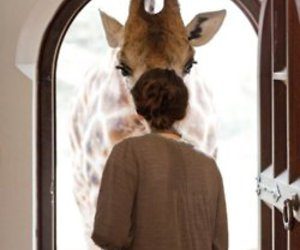 giraffe, animal, and door image