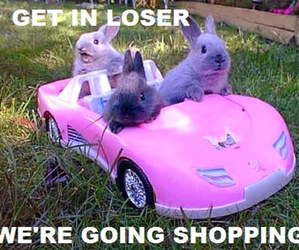 funny, rabbit, and pink image