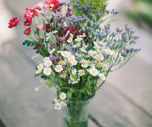 flowers, floral, and summer image