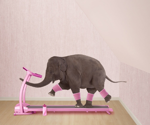 amazing, animal, and elephant image