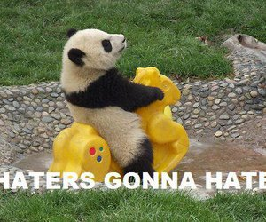panda, funny, and haters gonna hate image
