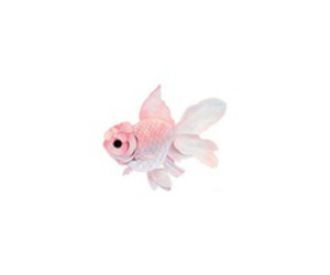 fish, pink, and art image