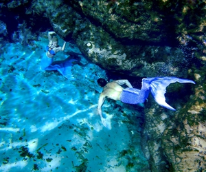 beauty, blue, and mermaid image