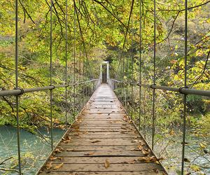 bridge, nature, and photography image
