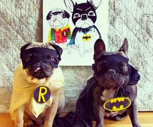 pug, batman, and dog image