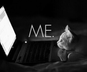 cat, me, and computer image