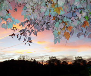 leaves, nature, and sky image