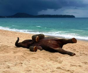 beach, animal, and elephant image