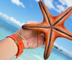 beach, star, and summer image