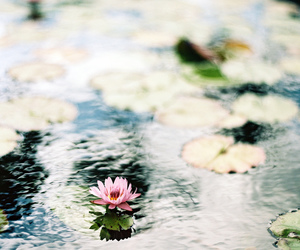 flowers, water, and nature image