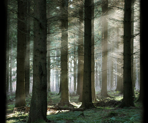 beautiful, forest, and myst image