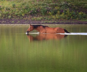 horse, equestrian, and nature image