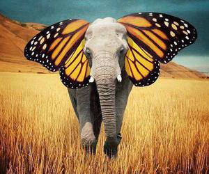 butterfly, elephant, and animal image